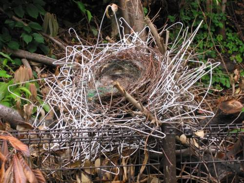 coat-hanger-nest