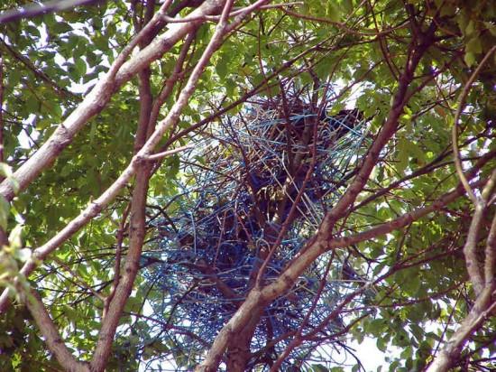 coat-hanger-nest3-550x412