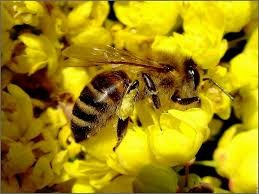 abeille-et-fleur-copie-1