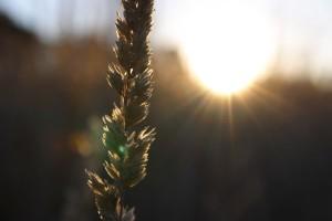 Bl-au-soleil