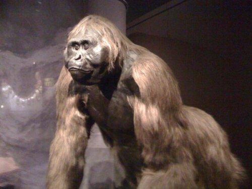 Gigantopitheque-1