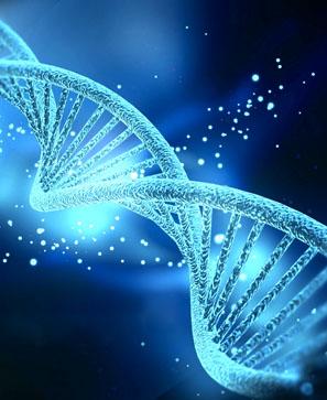 haut_epigenetique