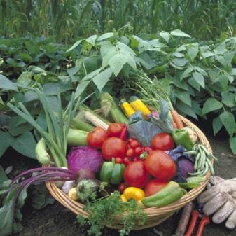 ab-bio-culture-agriculture-biologique-france-ouibio-biologiquement-legumes