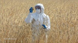 Agricultural-Engineer-On-Field-Examining-Ripe-Ears-Of-Grain-GMO-Test-Crop-400x225