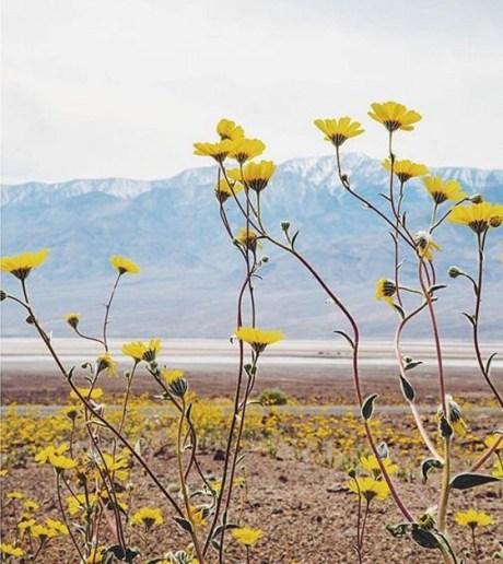 fleurs-valleedelamort-1