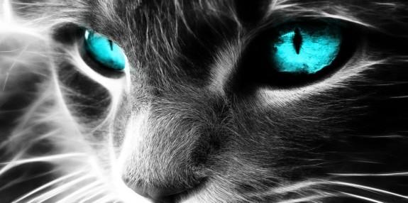 spiritual-cat-2-1024x510