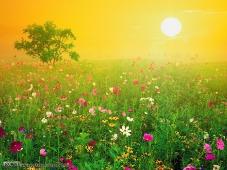 Amazing-Nature-Wallpapers-national-geographic-7896278-1280-960