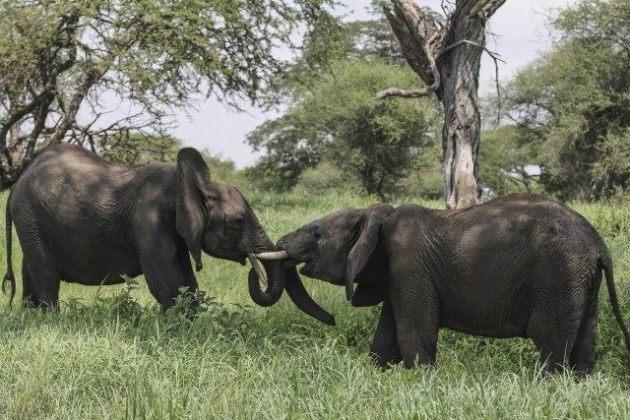 elephant-verdure (1)