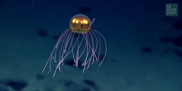 Une-mysterieuse-meduse-decouverte-dans-l-ocean-Pacifique