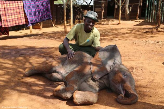 david-sheldrick-wildlife-trust-elephants-protection-kenya-01