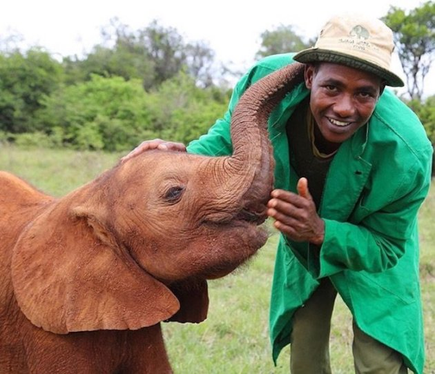 david-sheldrick-wildlife-trust-elephants-protection-kenya-03