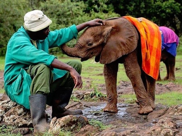 david-sheldrick-wildlife-trust-elephants-protection-kenya-04