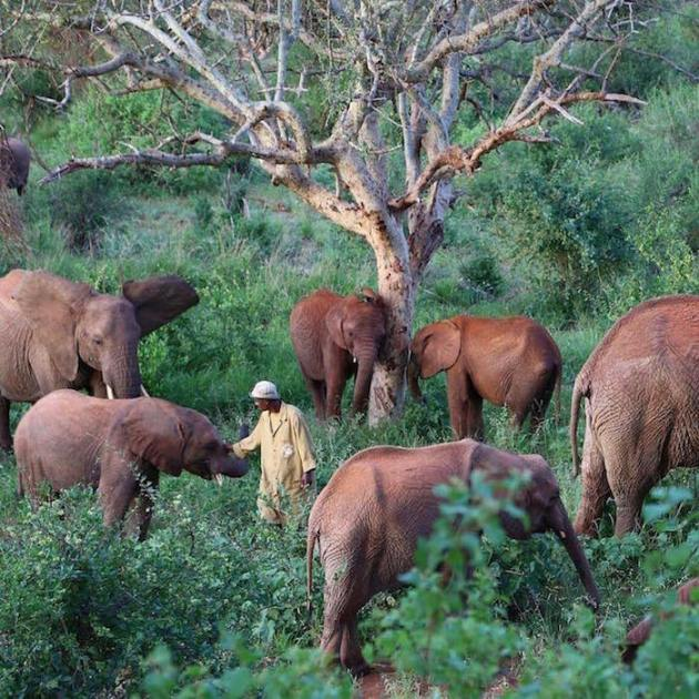 david-sheldrick-wildlife-trust-elephants-protection-kenya-06