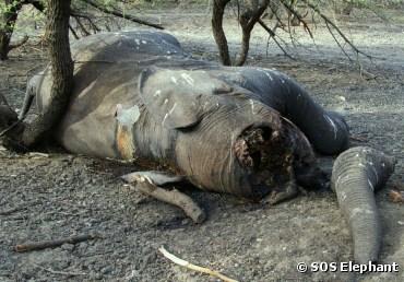 elephant-afrique-1