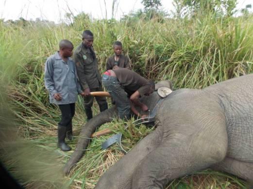 elephant-afrique-2