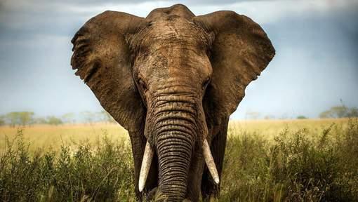 elephant-afrique-3